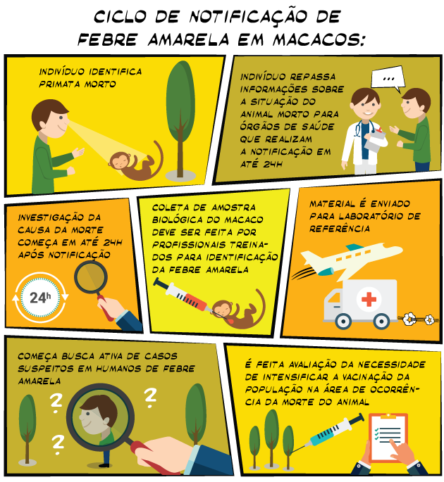 Infográfico_Macacos1